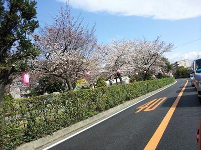 茨木市 さくらまつり