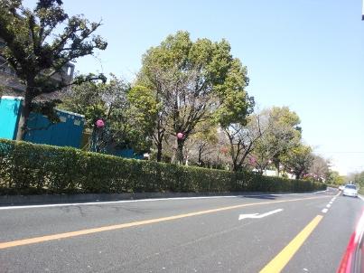 茨木 桜通り
